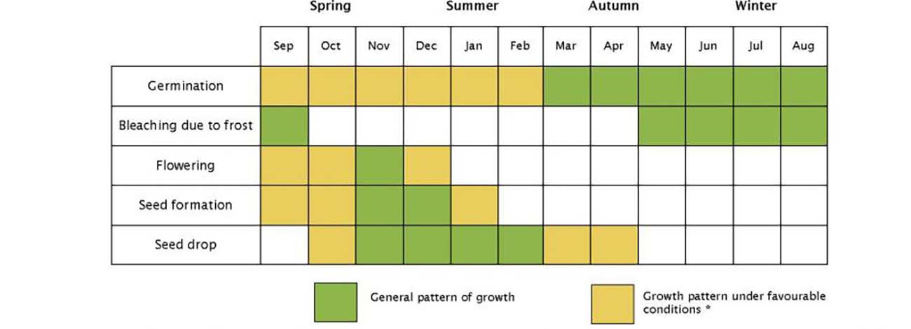 The timing of different stages can vary depending on temperature, rainfall and soil fertility. Source: National Serrated Tussock Best Practice Manual 2008.